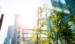 Sun shining through grass with tall buildings in background